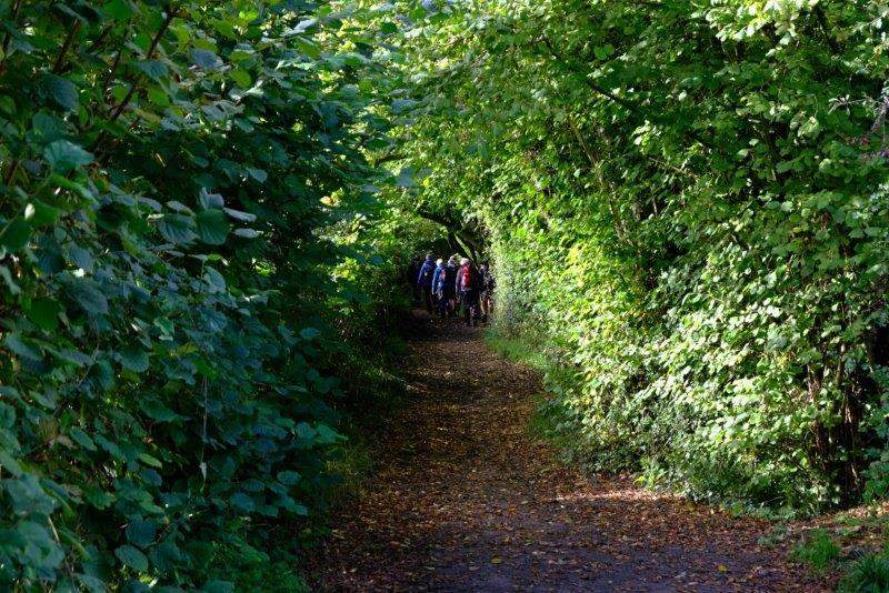 Leaving Marshfield we head down a tree lined path