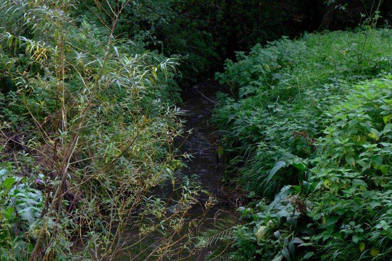 As we cross a stream