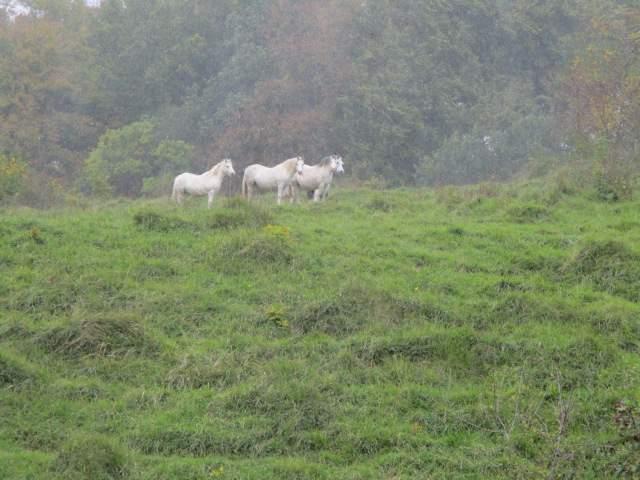 Exmoor ponies, I'm told