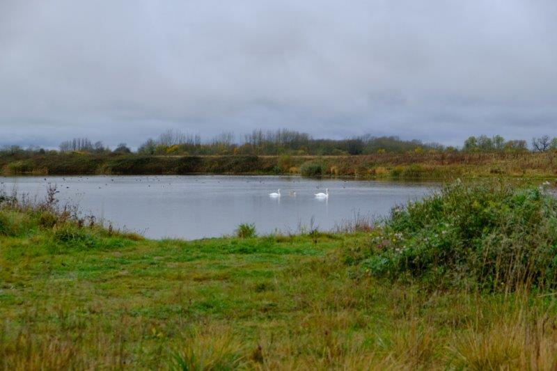 Another lake with swans