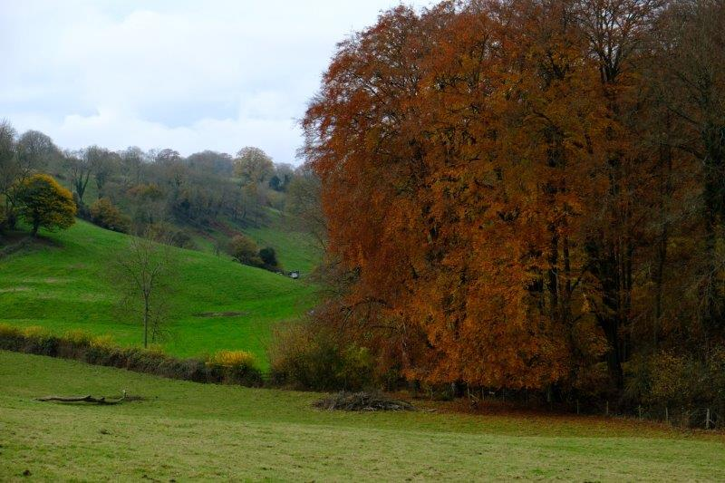 Then back up as we are confronted by a beech tree in full Autumn colour