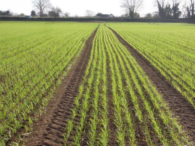 Crops growing strongly