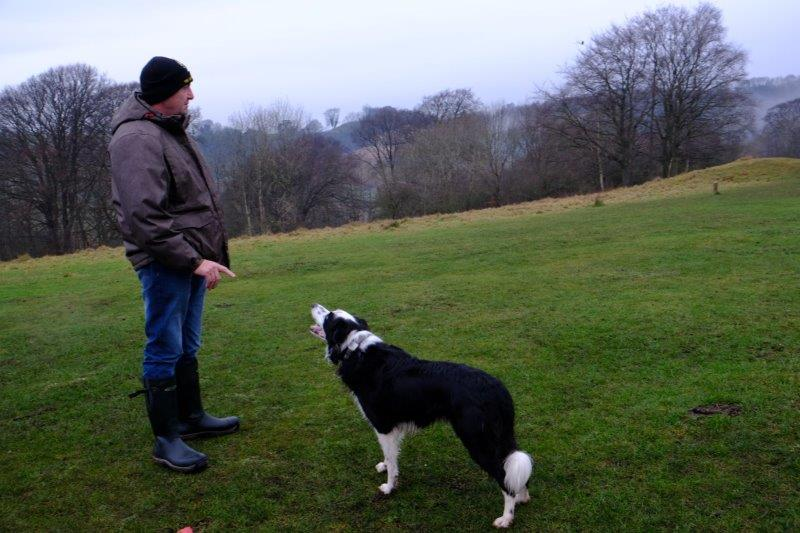 Of border collies being put through their paces