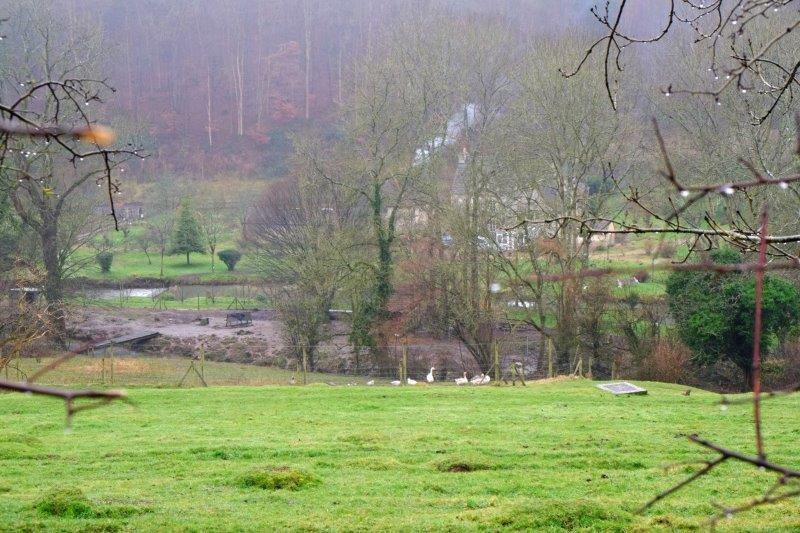 A smallholding with geese below