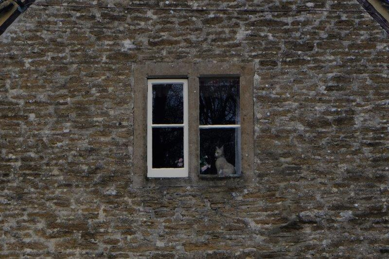 More watchful eyes in that window
