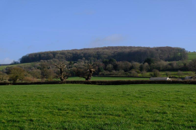 View up to Standish Woods
