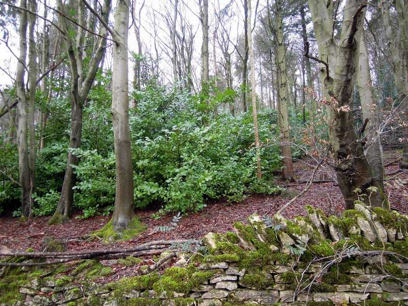 Back in the trees, we see plenty of laurel plants