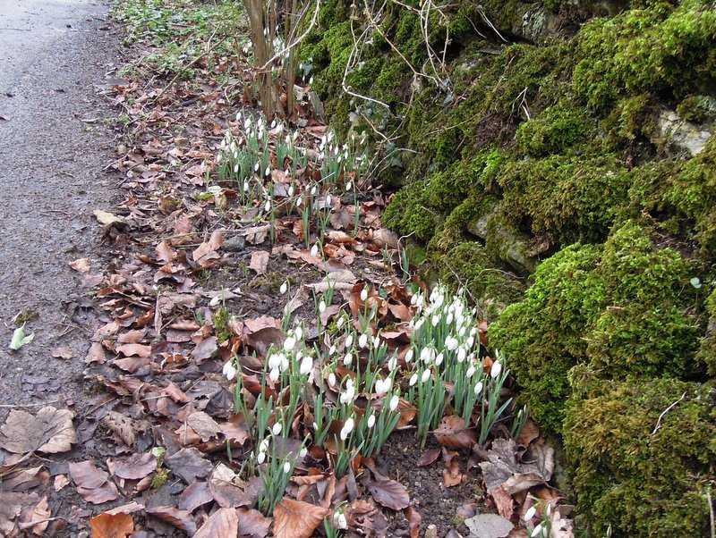 Roadside signs of Spring