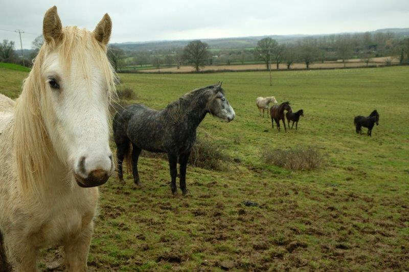 Where we encounter a herd of horses