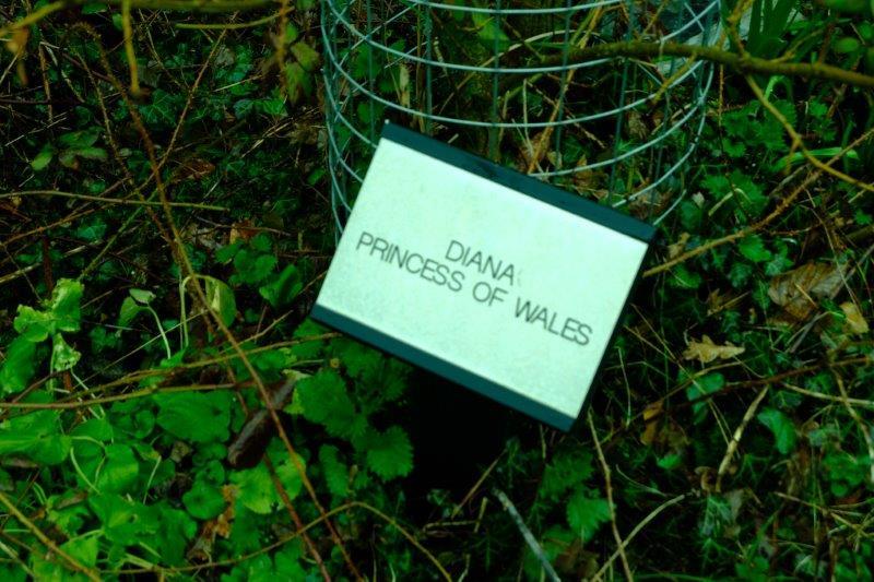 Memorial to Princess Diana - tree hasn't grown much