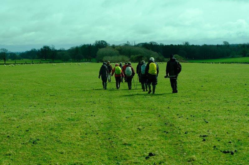 Crossing fields full of sheep