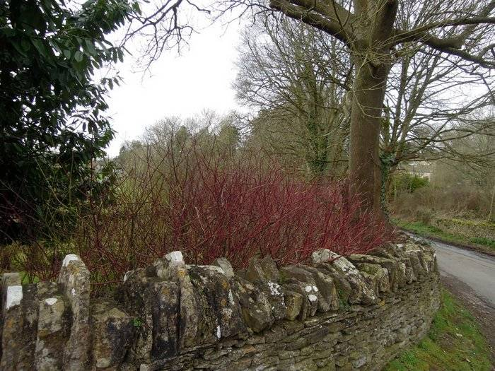 Past the red dogwood