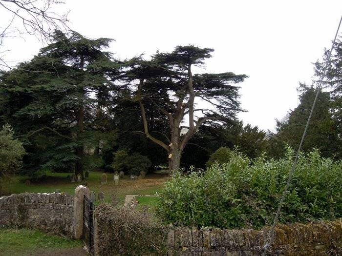 Some serious lopping in Amberley churchyard