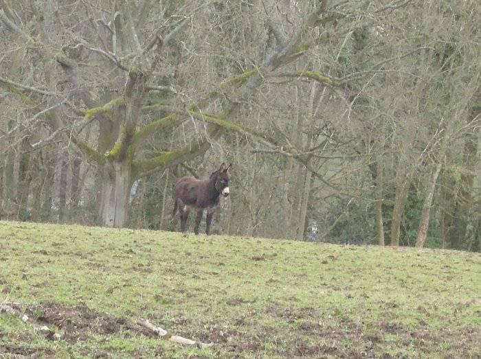 Minchinhampton Common's friendly donkey