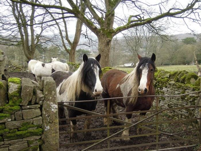 Wintering together with a few horses. When is Spring coming?