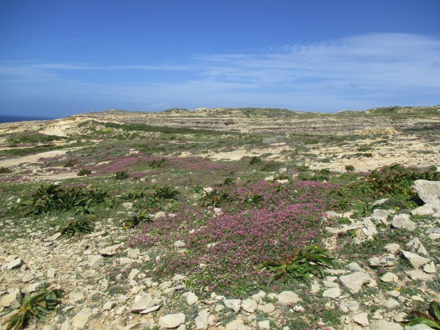 The yellow wildflowers disappear and are replaced by purple ones