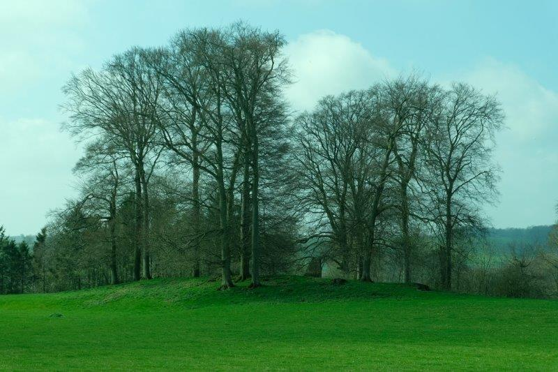 Long barrow with trees on top