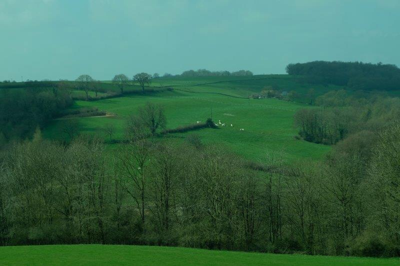 Across the valley we see the herd of white cows we saw earlier