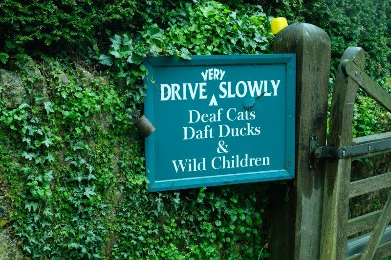 As well as ducks, cats and children
