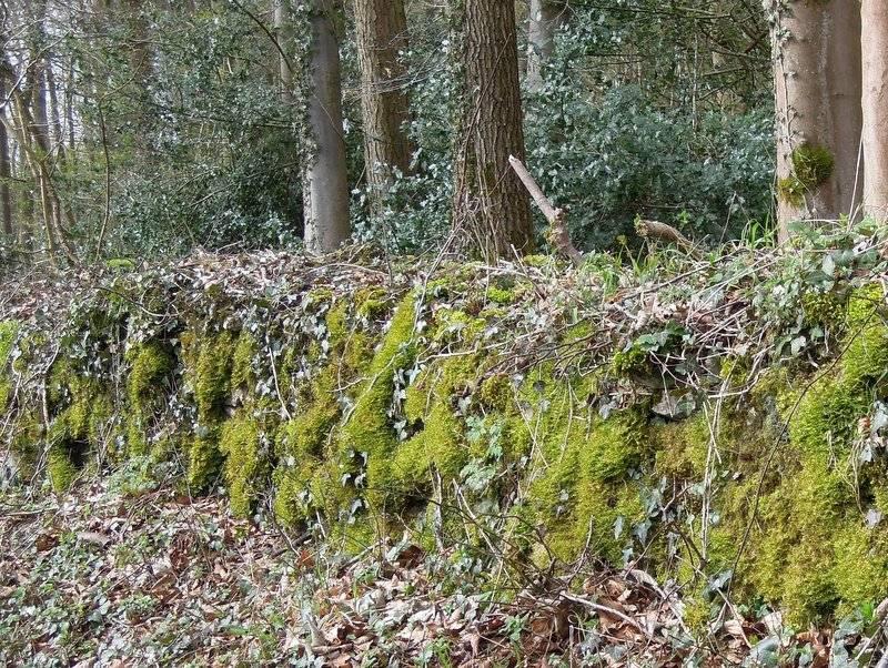Passing mossy walls