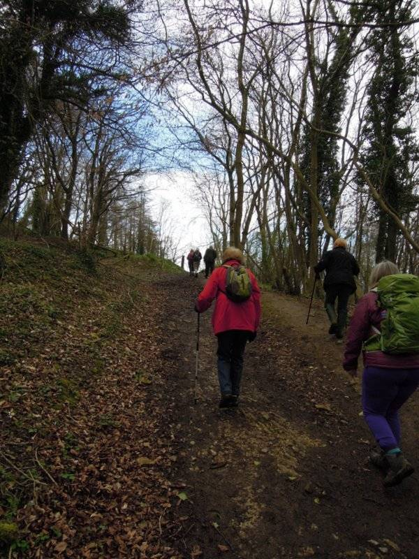Uphill in Halliday's Wood