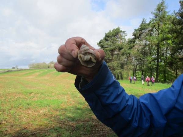 Colin finds a Roman snail
