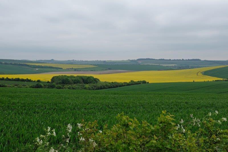 A field of rape providing a bit more colour