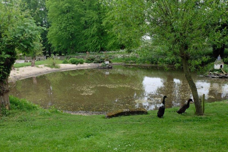 Where there is a duckpond and ducks