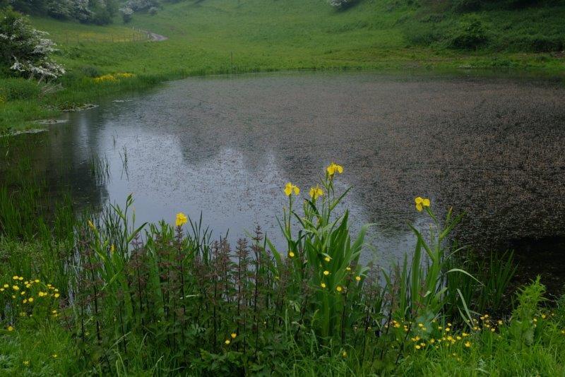 Round the pond