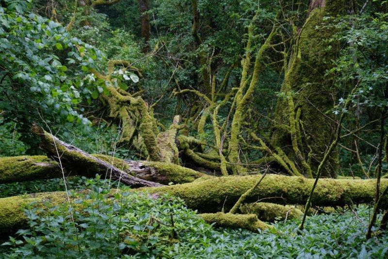 Lichen on some old logs