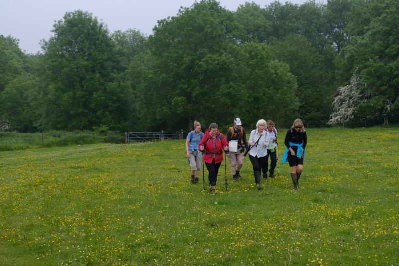 Now out of the woods and into a field of buttercups