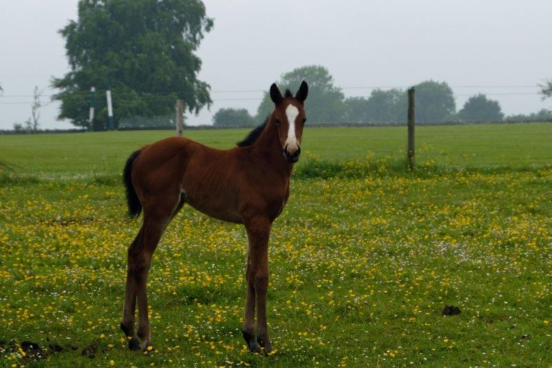 Another foal