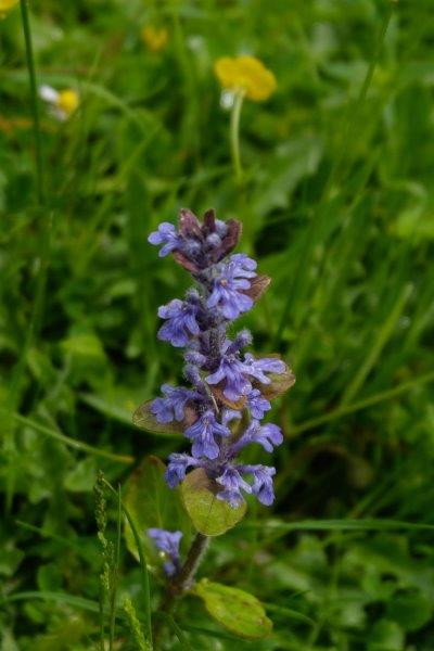 Is this self-heal someone?