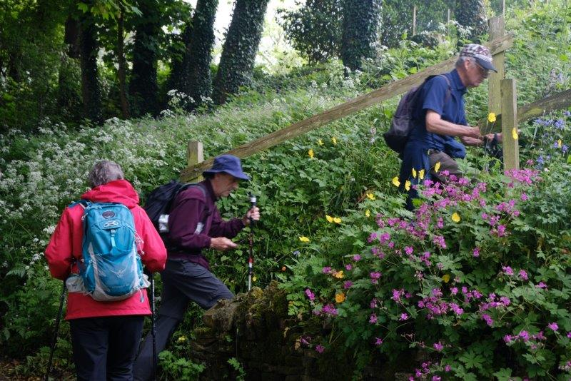 A short climb through a cottage garden