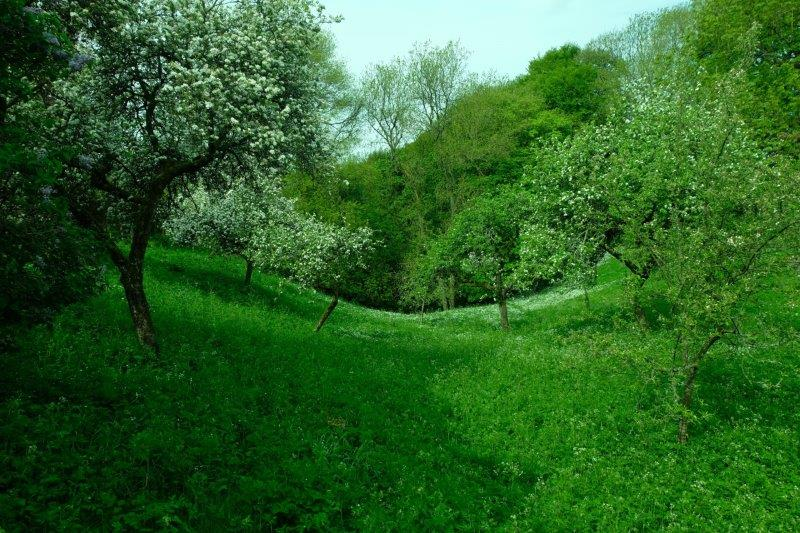 And in the orchards