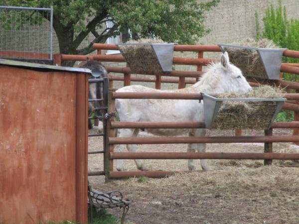 We pass the Donkey Sanctuary