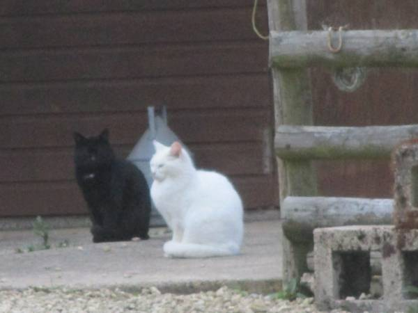 This isn't the same cat, it's his brother, together with a friend.