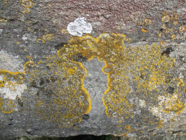 I took this picture of lichen on the church wall while waiting for the loo