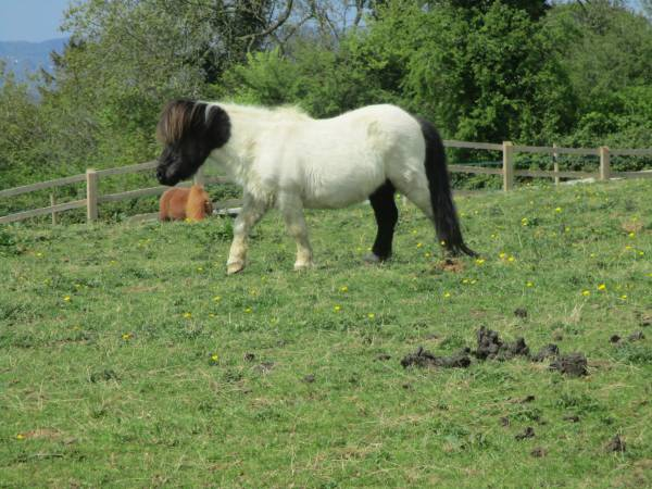 Through fields of horses, this one with an attractive colour scheme