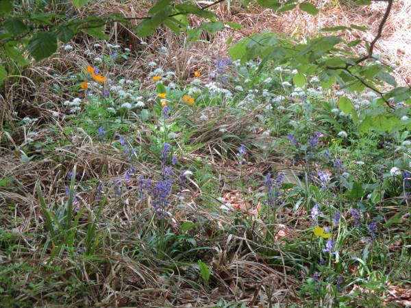 A collection of wild flowers