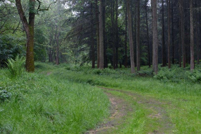 Meandering through the woods