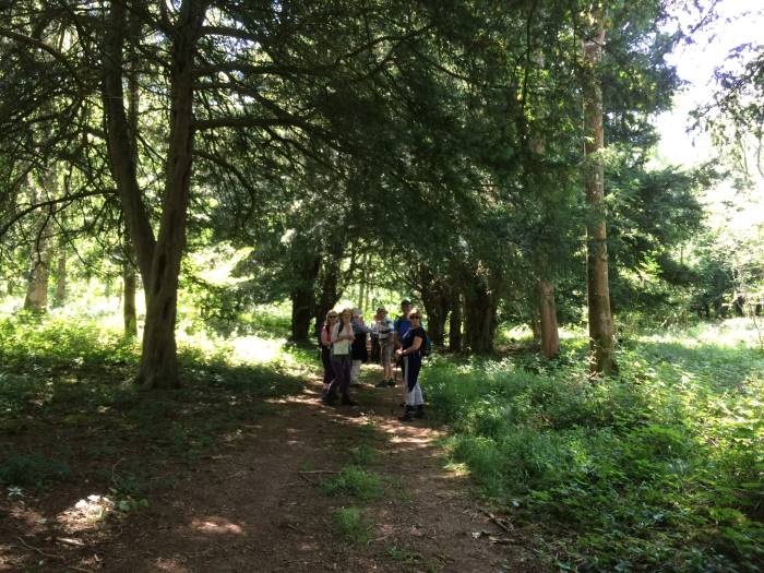 But we found the yew trees!