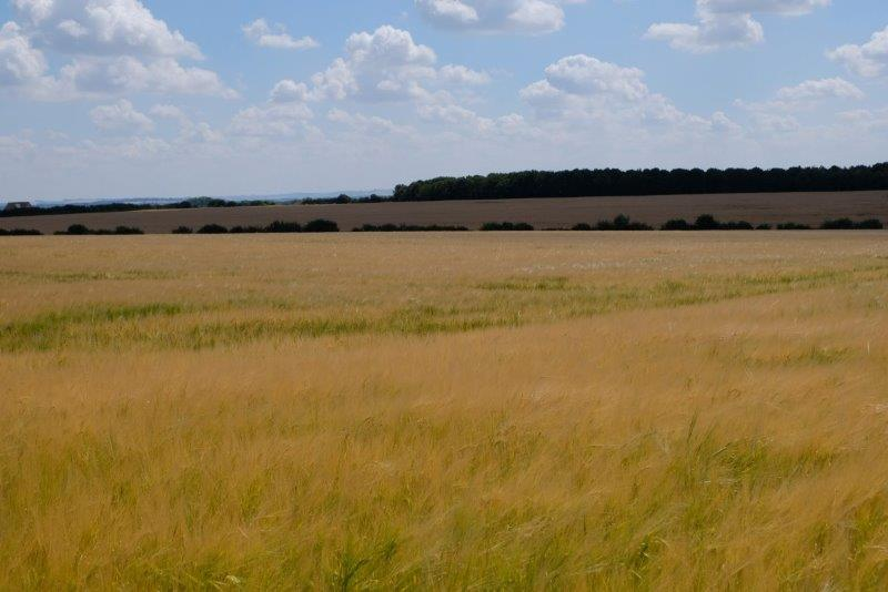 We continue across fields of barley