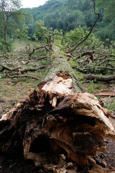 Round a fallen tree