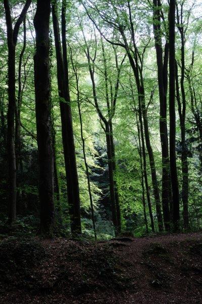 The sun shines through the trees