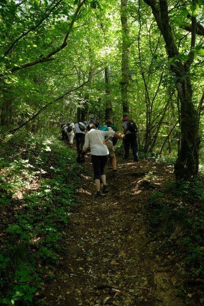 Now up into Siccaridge Wood