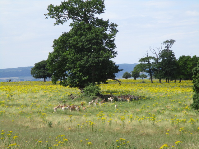 A herd of deer lower down