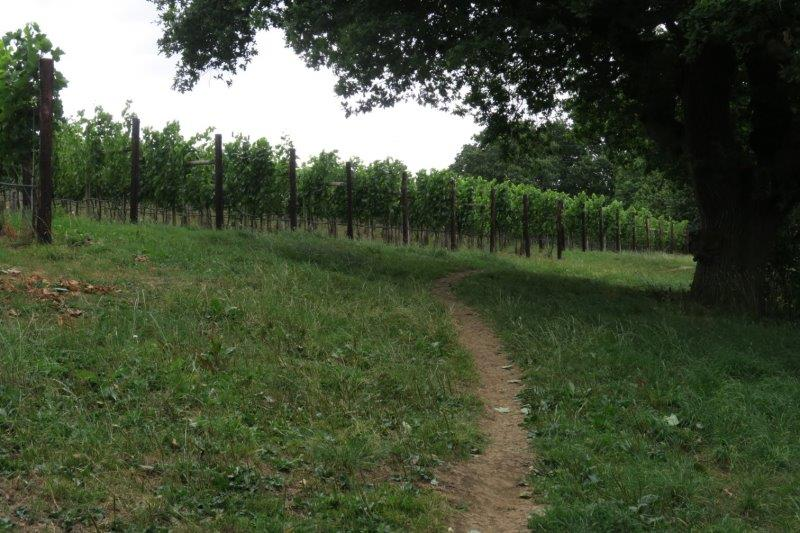 And over the top of Doverow to the vineyard