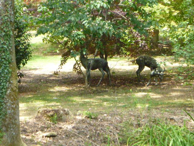 More sculptures of deer