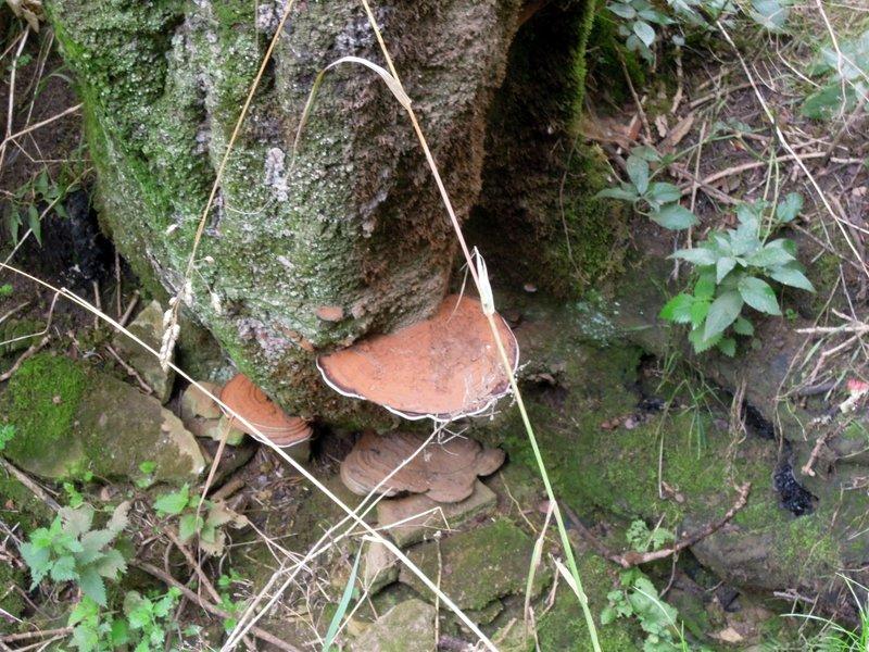 Impressive bracket fungus